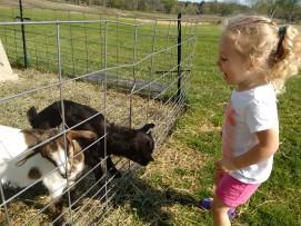 Willa's new favorite place- Springdell Farm!!